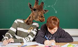 girafer